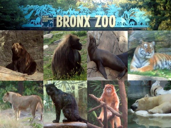 Monroe Alumni Family Day At The Bronx Zoo